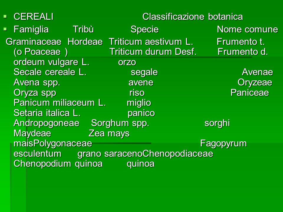 CEREALI Classificazione botanica CEREALI Classificazione botanica Famiglia Tribù Specie Nome comune Famiglia Tribù Specie Nome comune Graminaceae Hordeae Triticum aestivum L.