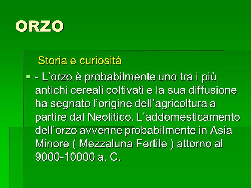 ORZO Storia e curiosità Storia e curiosità - Lorzo è probabilmente uno tra i più antichi cereali coltivati e la sua diffusione ha segnato lorigine dellagricoltura a partire dal Neolitico.