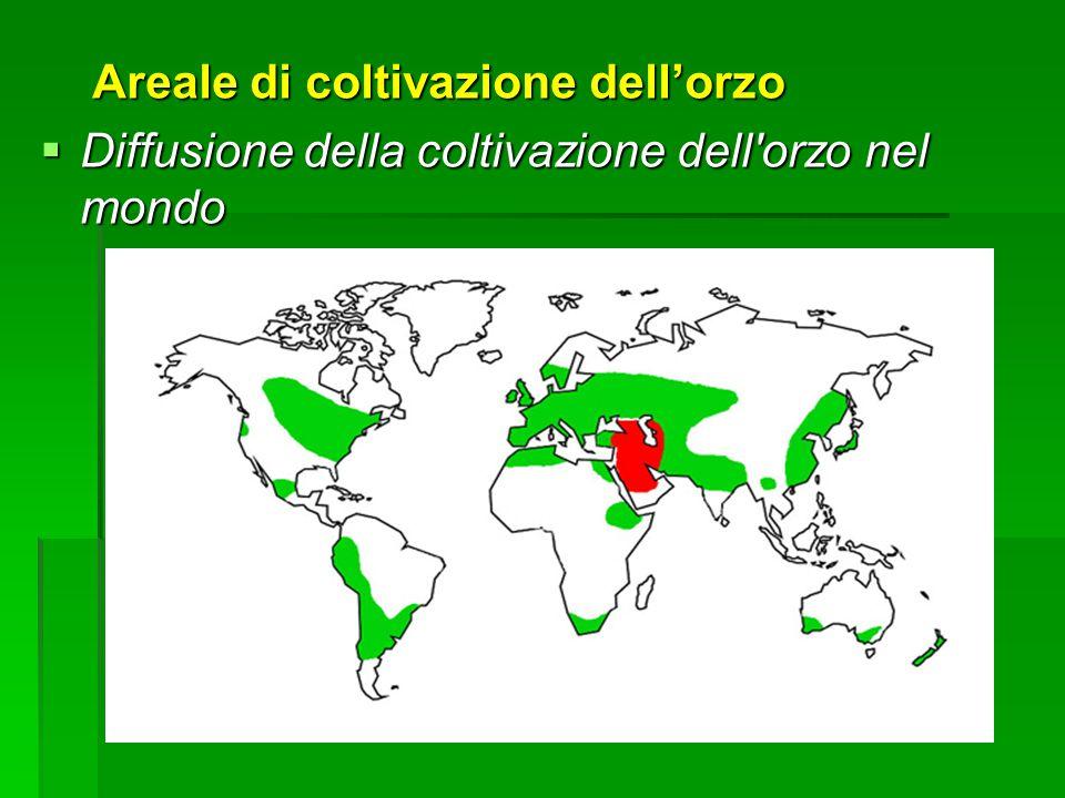 Areale di coltivazione dellorzo Areale di coltivazione dellorzo Diffusione della coltivazione dell orzo nel mondo Diffusione della coltivazione dell orzo nel mondo