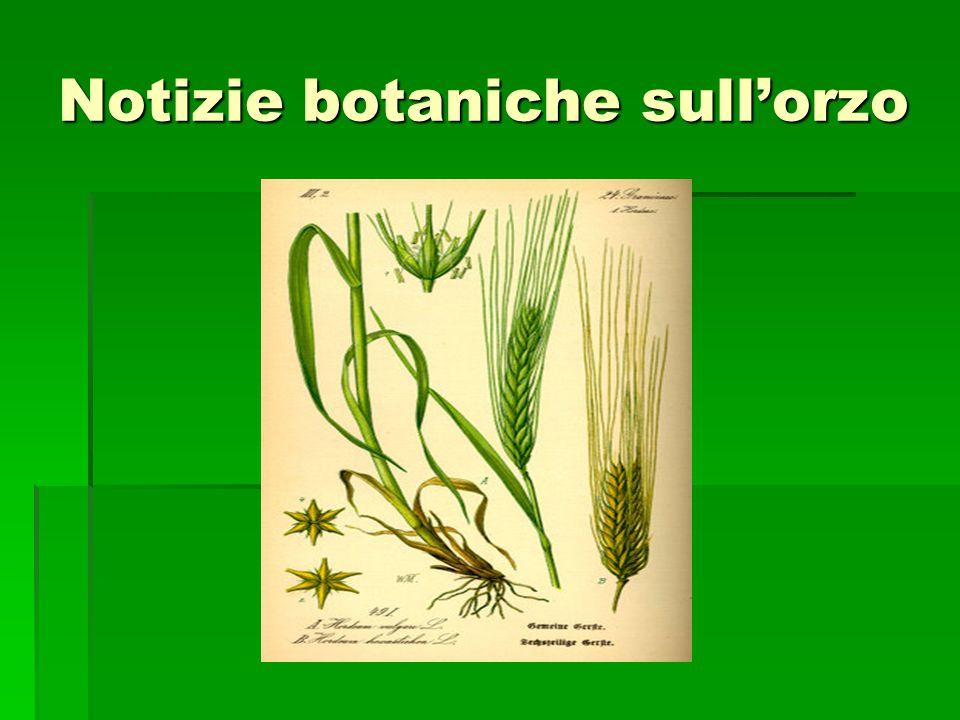 Notizie botaniche sullorzo
