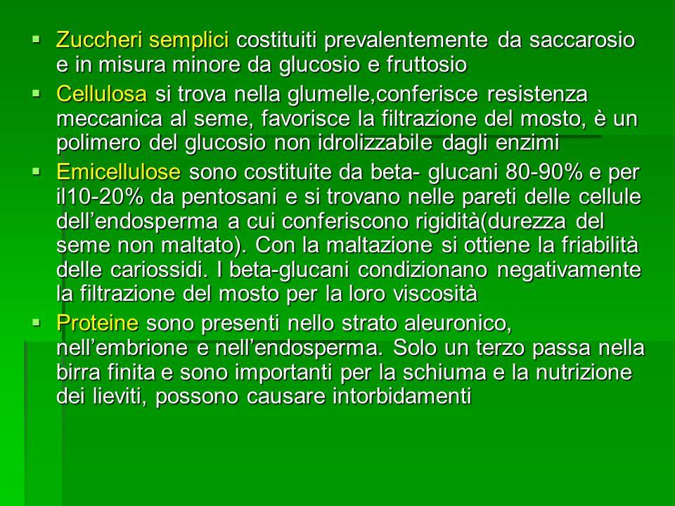 Zuccheri semplici costituiti prevalentemente da saccarosio e in misura minore da glucosio e fruttosio Zuccheri semplici costituiti prevalentemente da saccarosio e in misura minore da glucosio e fruttosio Cellulosa si trova nella glumelle,conferisce resistenza meccanica al seme, favorisce la filtrazione del mosto, è un polimero del glucosio non idrolizzabile dagli enzimi Cellulosa si trova nella glumelle,conferisce resistenza meccanica al seme, favorisce la filtrazione del mosto, è un polimero del glucosio non idrolizzabile dagli enzimi Emicellulose sono costituite da beta- glucani 80-90% e per il10-20% da pentosani e si trovano nelle pareti delle cellule dellendosperma a cui conferiscono rigidità(durezza del seme non maltato).