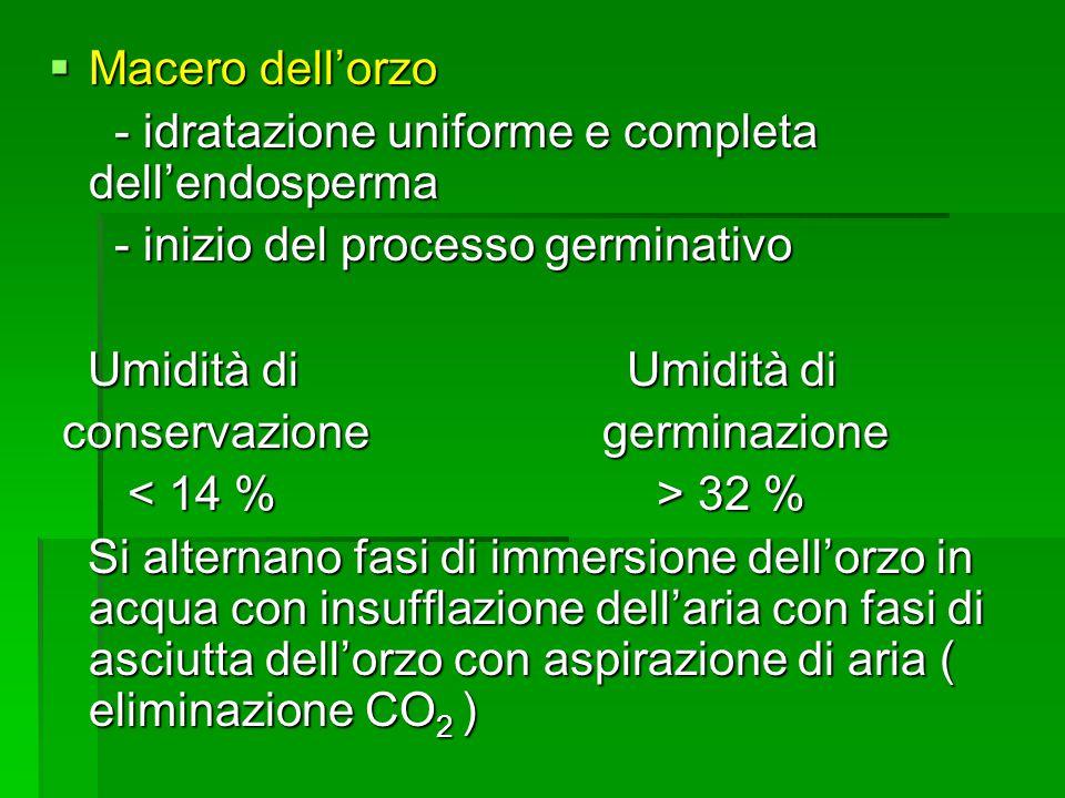 Macero dellorzo Macero dellorzo - idratazione uniforme e completa dellendosperma - idratazione uniforme e completa dellendosperma - inizio del process