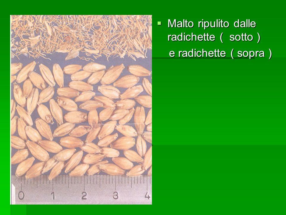 Malto ripulito dalle radichette ( sotto ) Malto ripulito dalle radichette ( sotto ) e radichette ( sopra ) e radichette ( sopra )