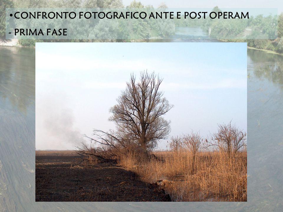 CONFRONTO FOTOGRAFICO ANTE E POST OPERAM - PRIMA FASE