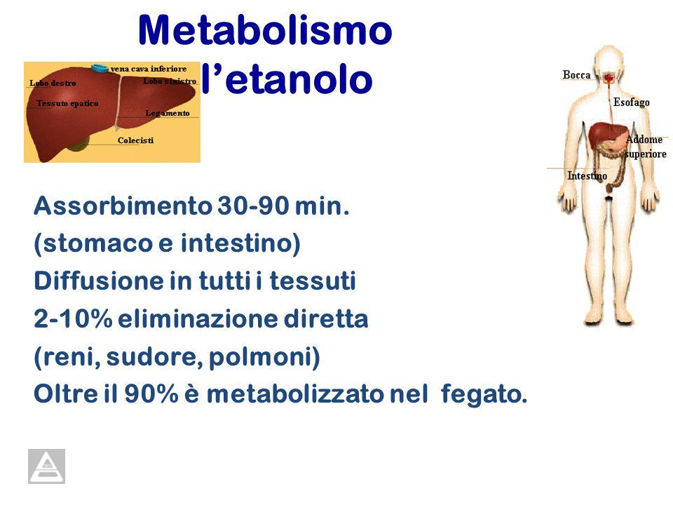 Metabolismo delletanolo Assorbimento 30-90 min. (stomaco e intestino) Diffusione in tutti i tessuti 2-10% eliminazione diretta (reni, sudore, polmoni)