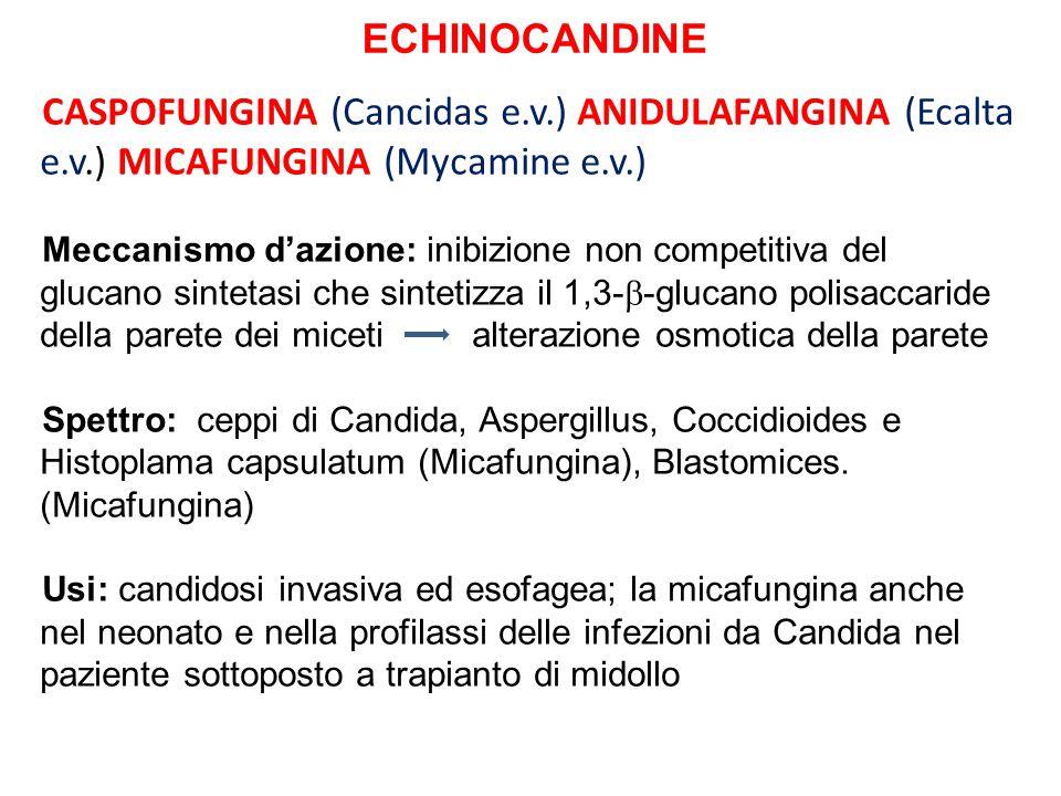 ECHINOCANDINE CASPOFUNGINA (Cancidas e.v.) ANIDULAFANGINA (Ecalta e.v.) MICAFUNGINA (Mycamine e.v.) Meccanismo dazione: inibizione non competitiva del
