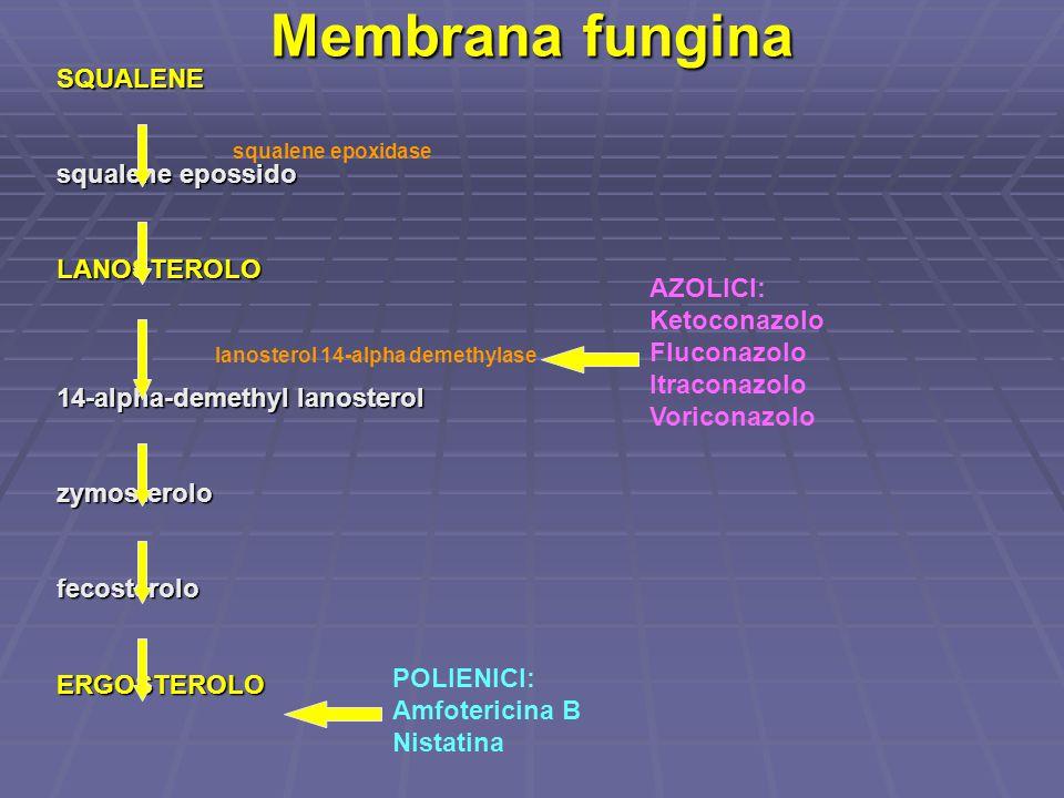 Membrana fungina SQUALENE squalene epossido LANOSTEROLO 14-alpha-demethyl lanosterol zymosterolofecosteroloERGOSTEROLO AZOLICI: Ketoconazolo Fluconazo