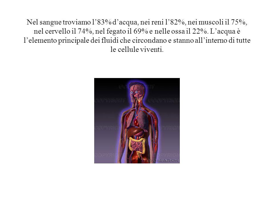 Nel sangue troviamo l83% dacqua, nei reni l82%, nei muscoli il 75%, nel cervello il 74%, nel fegato il 69% e nelle ossa il 22%. Lacqua è lelemento pri