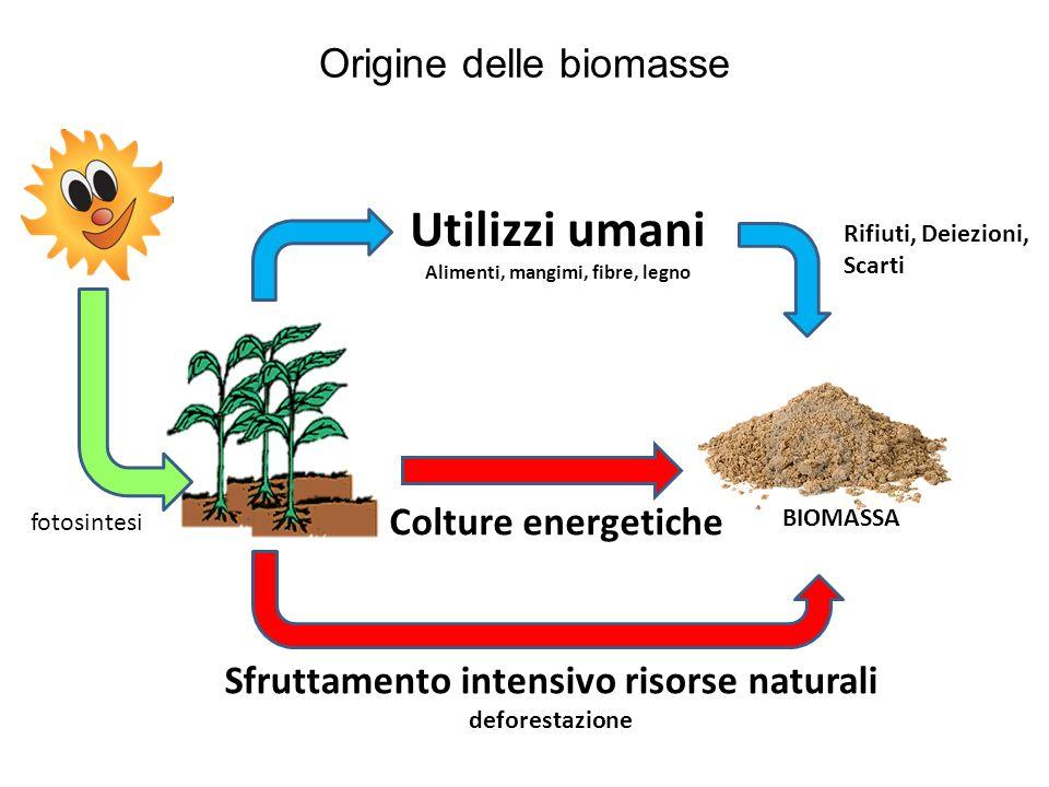 Origine delle biomasse fotosintesi Utilizzi umani Alimenti, mangimi, fibre, legno BIOMASSA Rifiuti, Deiezioni, Scarti Colture energetiche Sfruttamento
