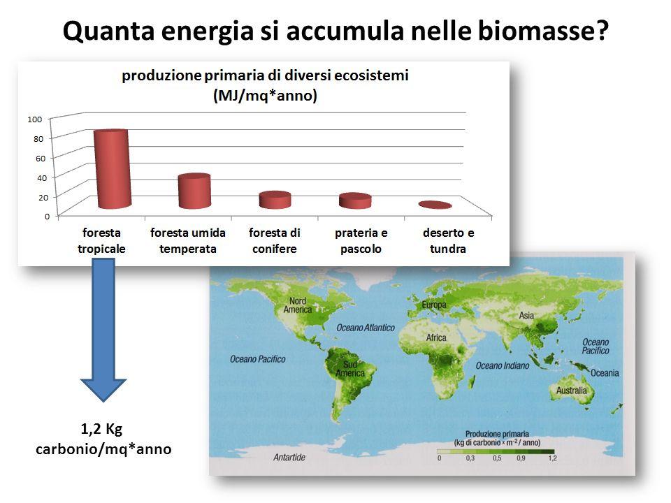 Quanta energia si accumula nelle biomasse? 1,2 Kg carbonio/mq*anno