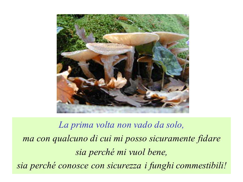 La prima volta non vado da solo, ma con qualcuno di cui mi posso sicuramente fidare sia perché mi vuol bene, sia perché conosce con sicurezza i funghi commestibili!