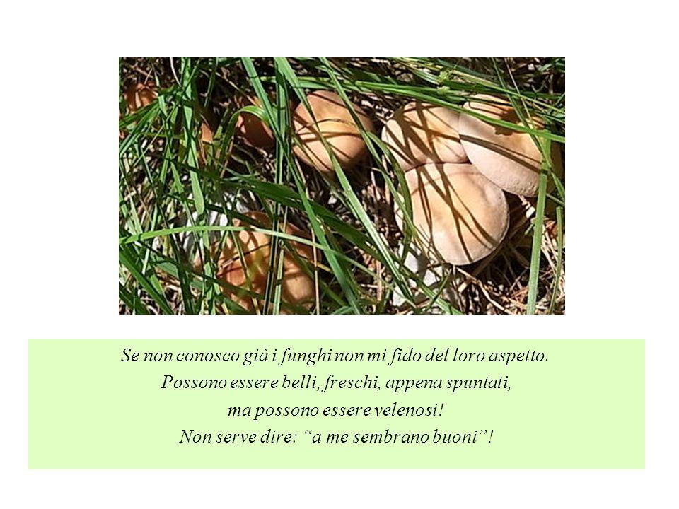 Se non conosco già i funghi non mi fido del loro aspetto. Possono essere belli, freschi, appena spuntati, ma possono essere velenosi! Non serve dire:
