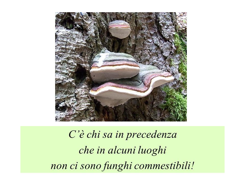 Cè chi sa in precedenza che in alcuni luoghi non ci sono funghi commestibili!