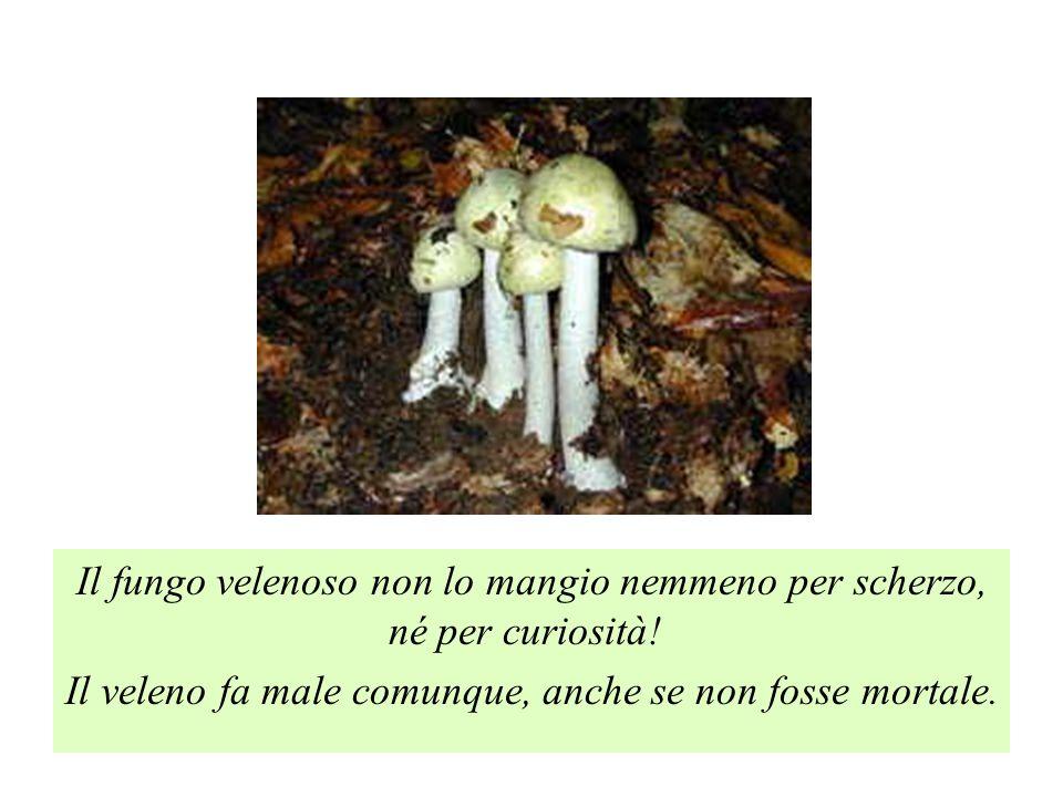 Il fungo velenoso non lo mangio nemmeno per scherzo, né per curiosità! Il veleno fa male comunque, anche se non fosse mortale.