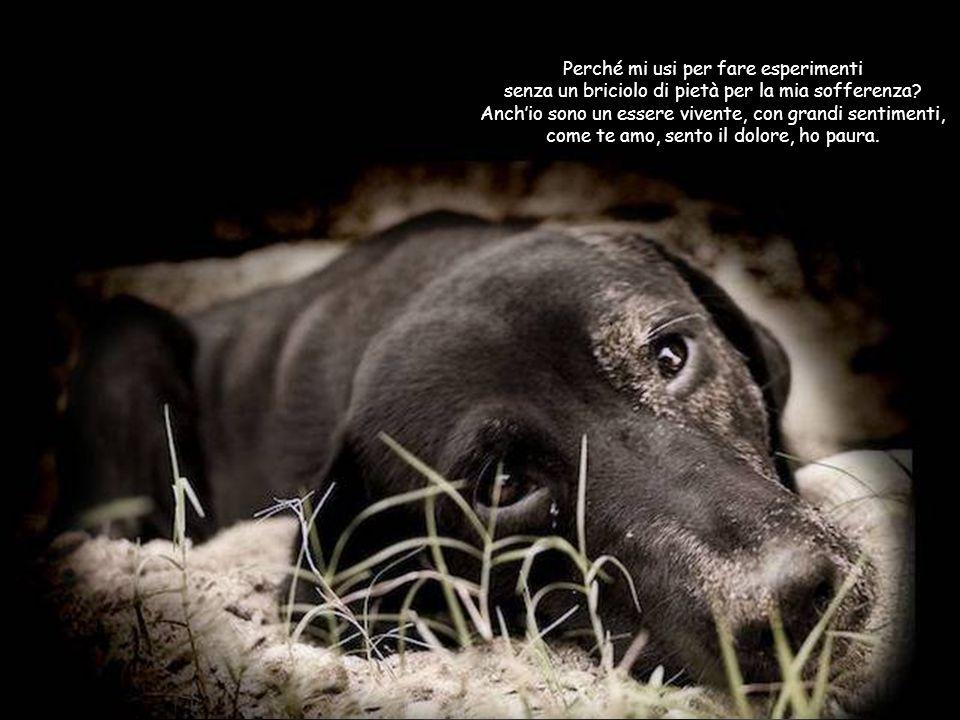 PREMESSA: È quasi primavera e nelle strade di campagna cominceranno a buttare nei fossati cuccioletti, che hanno lunica colpa di essere nati… Cercando