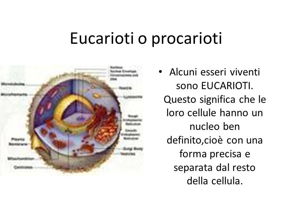 Eucarioti o procarioti Alcuni esseri viventi sono EUCARIOTI. Questo significa che le loro cellule hanno un nucleo ben definito,cioè con una forma prec