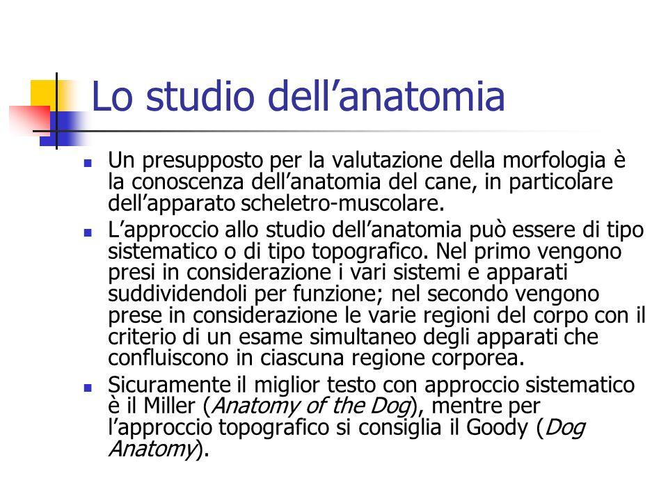 Lo studio dellanatomia Un presupposto per la valutazione della morfologia è la conoscenza dellanatomia del cane, in particolare dellapparato scheletro
