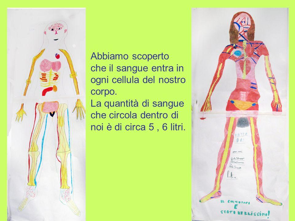 Anche nel laboratorio di scienze ci sono modelli di corpo con gli organi mobili, per capire come sono sistemati allinterno del nostro corpo.