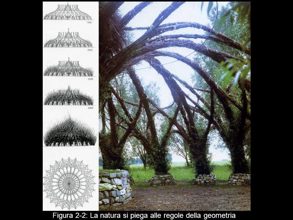 Figura 2 2: La natura si piega alle regole della geometria