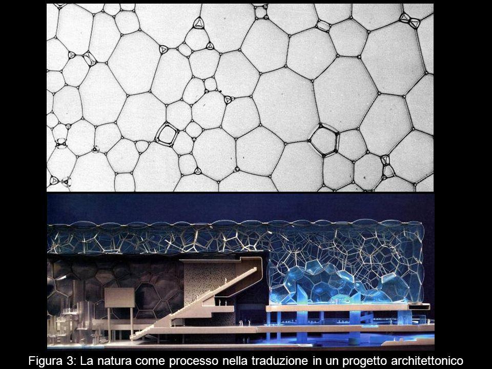 Figura 3: La natura come processo nella traduzione in un progetto architettonico