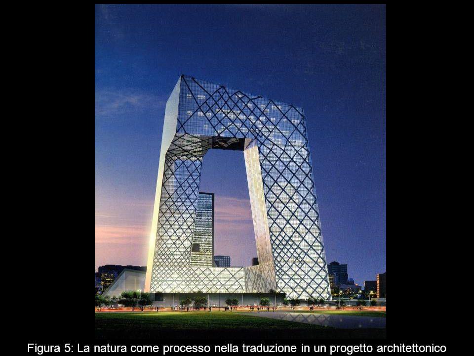 Figura 5: La natura come processo nella traduzione in un progetto architettonico