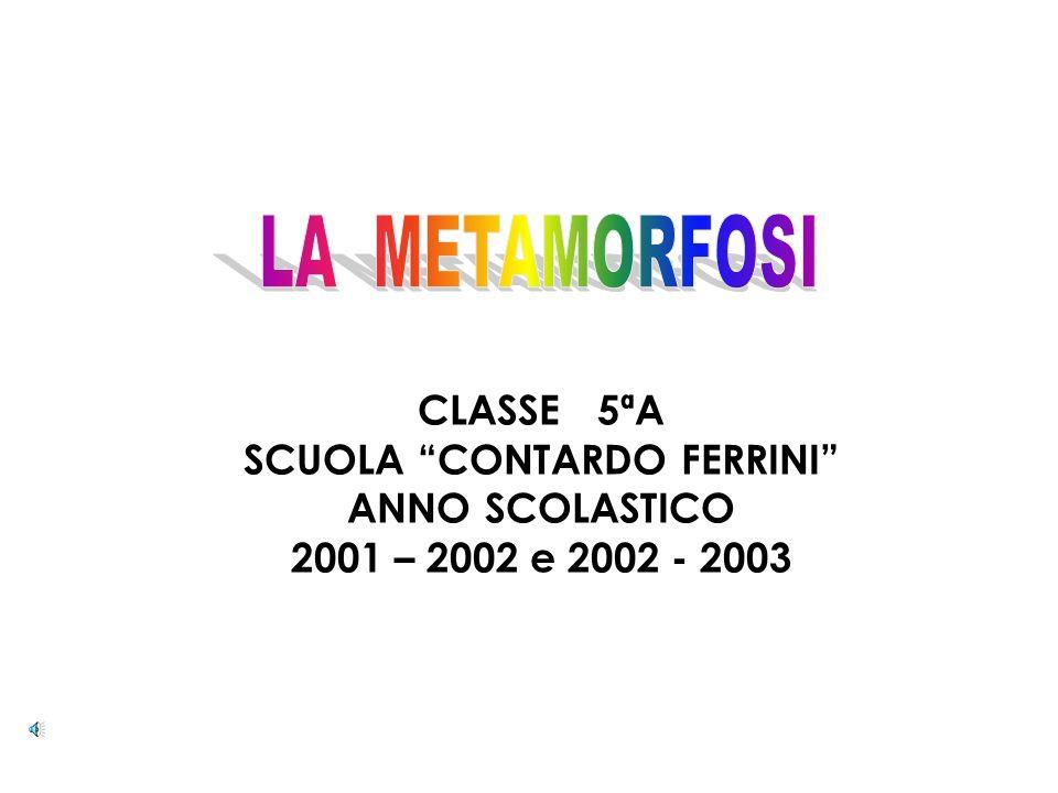 MUSIS Museo delle Scienze e dellInformazione Scientifica 38° Circolo Didattico di Roma Scuola Elementare Contardo Ferrini Progetto scientifico: ELISAB