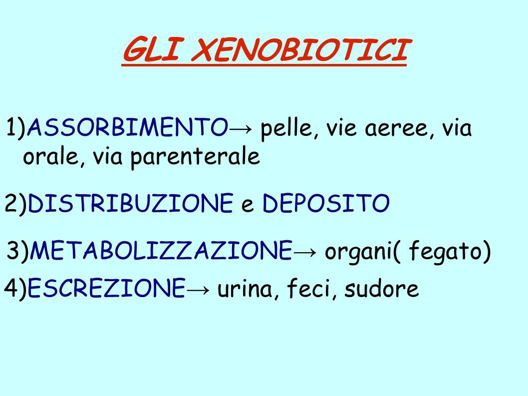 GLI XENOBIOTICI 2)DISTRIBUZIONE e DEPOSITO 3)METABOLIZZAZIONE organi( fegato) 4)ESCREZIONE urina, feci, sudore 1)ASSORBIMENTO pelle, vie aeree, via or