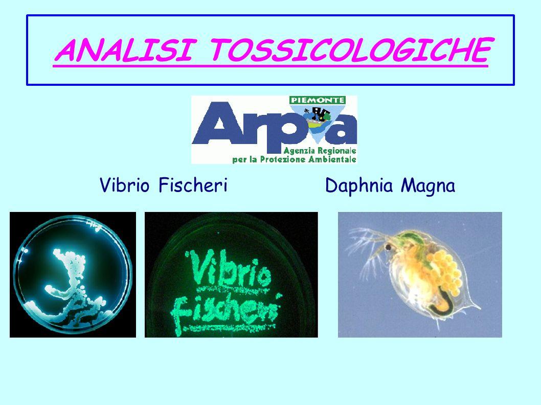 ANALISI TOSSICOLOGICHE Vibrio FischeriDaphnia Magna