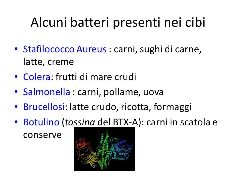 Alcuni batteri presenti nei cibi Stafilococco Aureus : carni, sughi di carne, latte, creme Colera: frutti di mare crudi Salmonella : carni, pollame, u