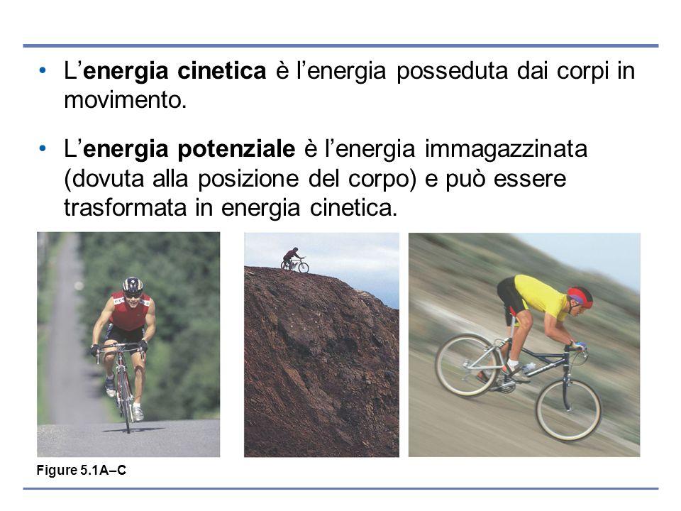 Lenergia cinetica è lenergia posseduta dai corpi in movimento. Lenergia potenziale è lenergia immagazzinata (dovuta alla posizione del corpo) e può es