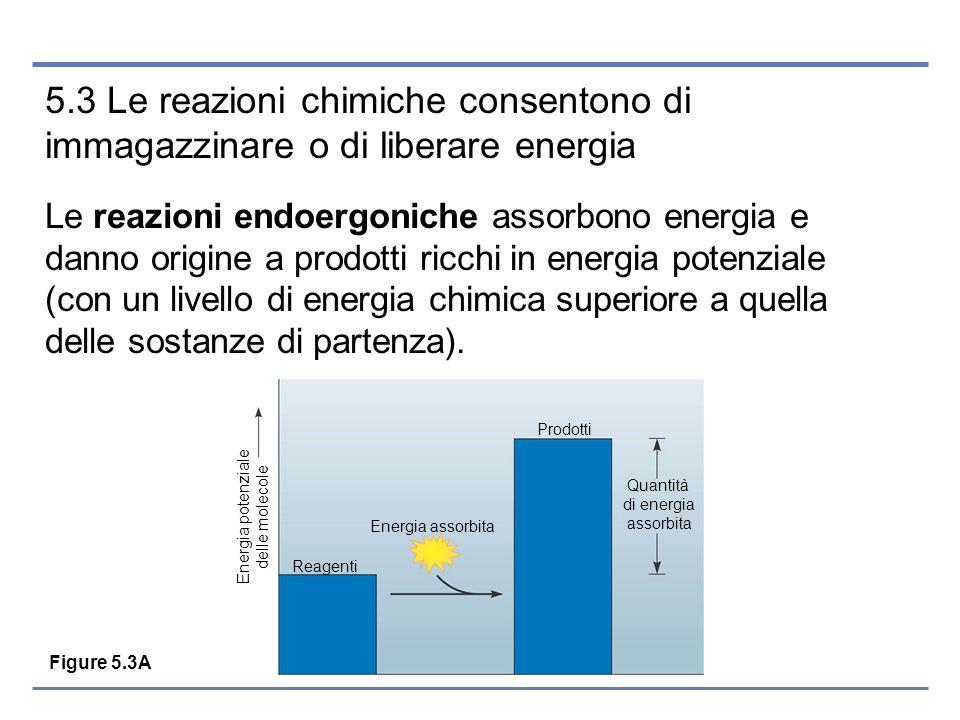 5.3 Le reazioni chimiche consentono di immagazzinare o di liberare energia Le reazioni endoergoniche assorbono energia e danno origine a prodotti ricc