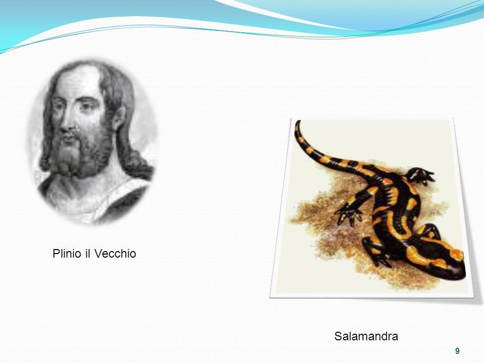 Plinio il Vecchio Salamandra 9