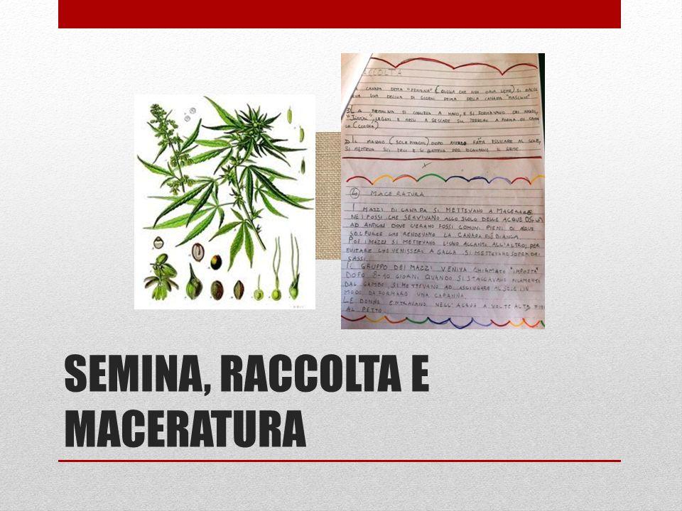 SEMINA, RACCOLTA E MACERATURA