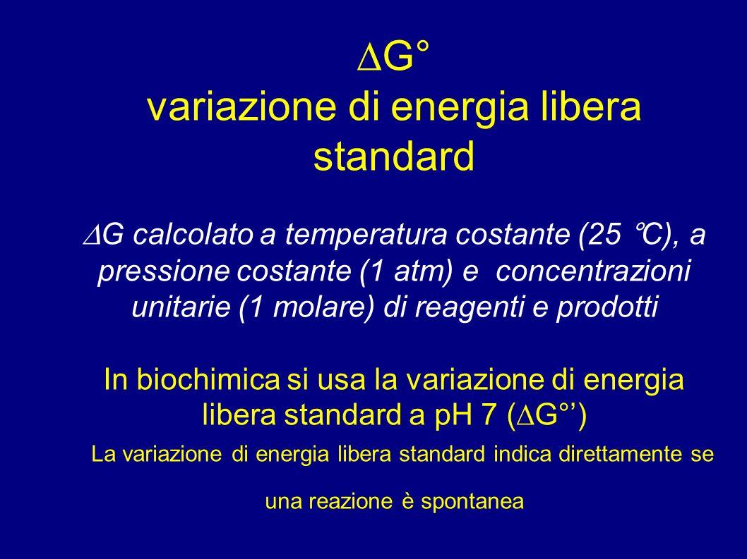 G° variazione di energia libera standard G calcolato a temperatura costante (25 °C), a pressione costante (1 atm) e concentrazioni unitarie (1 molare) di reagenti e prodotti In biochimica si usa la variazione di energia libera standard a pH 7 ( G°) La variazione di energia libera standard indica direttamente se una reazione è spontanea