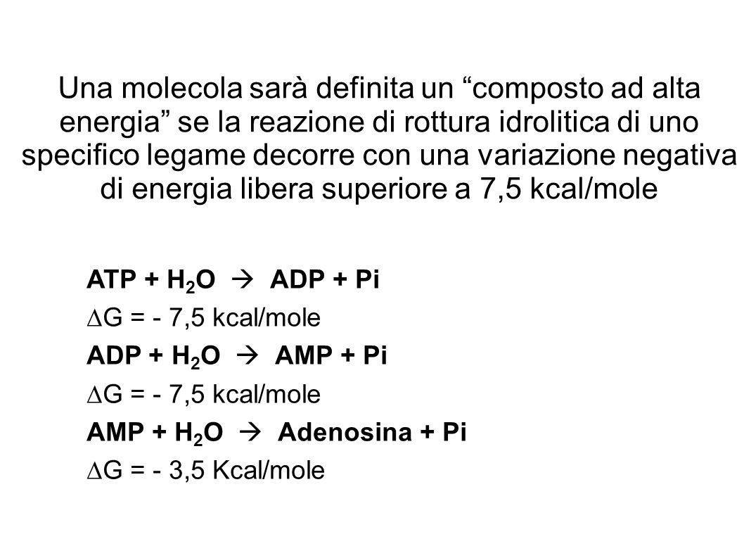 Una molecola sarà definita un composto ad alta energia se la reazione di rottura idrolitica di uno specifico legame decorre con una variazione negativa di energia libera superiore a 7,5 kcal/mole ATP + H 2 O ADP + Pi G = - 7,5 kcal/mole ADP + H 2 O AMP + Pi G = - 7,5 kcal/mole AMP + H 2 O Adenosina + Pi G = - 3,5 Kcal/mole