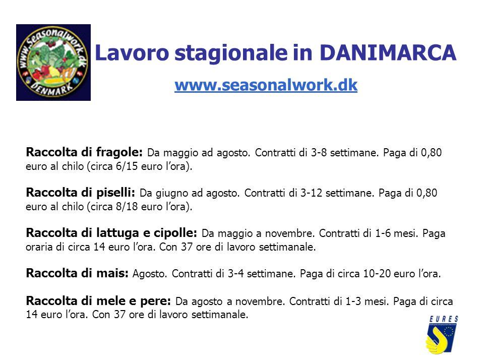 Lavoro stagionale in DANIMARCA www.seasonalwork.dk Raccolta di fragole: Da maggio ad agosto. Contratti di 3-8 settimane. Paga di 0,80 euro al chilo (c