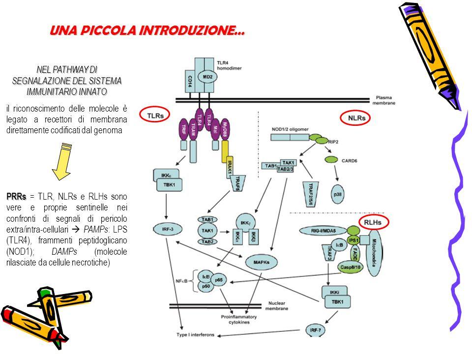 UNA PICCOLA INTRODUZIONE… NEL PATHWAY DI SEGNALAZIONE DEL SISTEMA IMMUNITARIO INNATO il riconoscimento delle molecole è legato a recettori di membrana