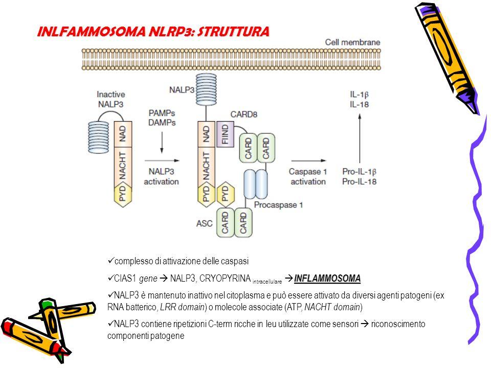 INLFAMMOSOMA NLRP3: STRUTTURA complesso di attivazione delle caspasi INFLAMMOSOMA CIAS1 gene NALP3, CRYOPYRINA intracellulare INFLAMMOSOMA NALP3 è man
