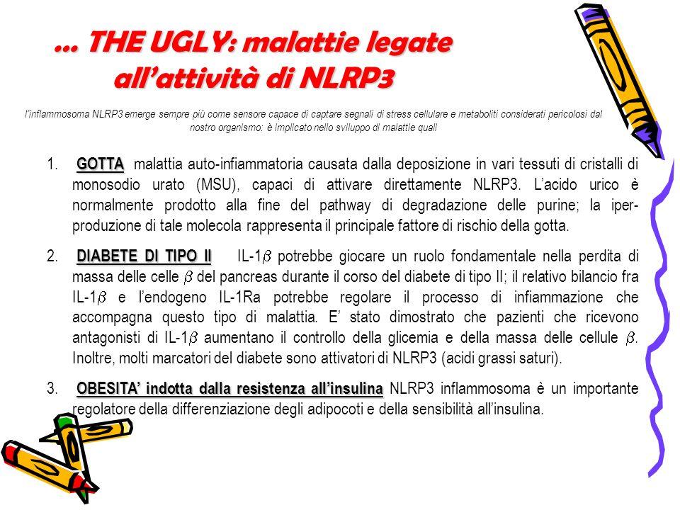 … THE UGLY: malattie legate allattività di NLRP3 linflammosoma NLRP3 emerge sempre più come sensore capace di captare segnali di stress cellulare e me