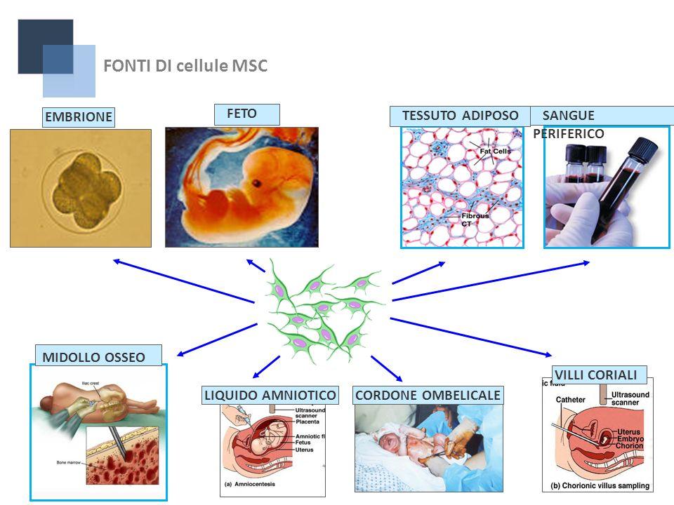 FETO LIQUIDO AMNIOTICOCORDONE OMBELICALEEMBRIONEVILLI CORIALI MIDOLLO OSSEO TESSUTO ADIPOSO SANGUE PERIFERICO FONTI DI cellule MSC
