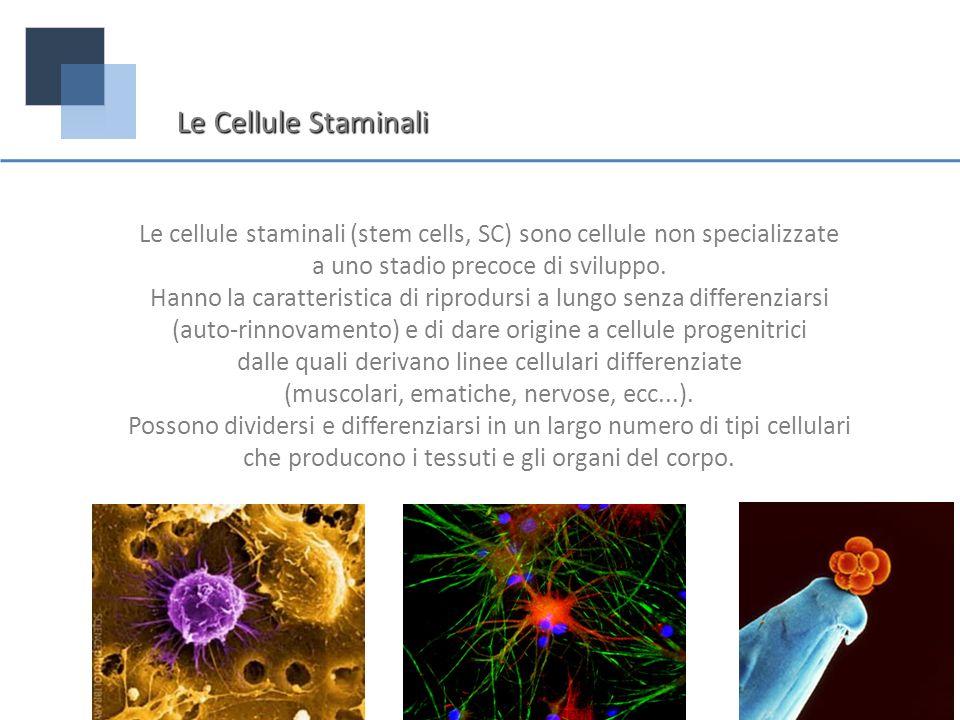 Le cellule staminali (stem cells, SC) sono cellule non specializzate a uno stadio precoce di sviluppo. Hanno la caratteristica di riprodursi a lungo s