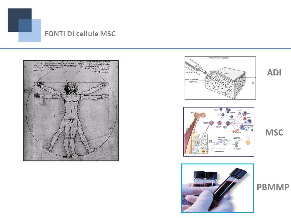 MSC ADI PBMMP FONTI DI cellule MSC