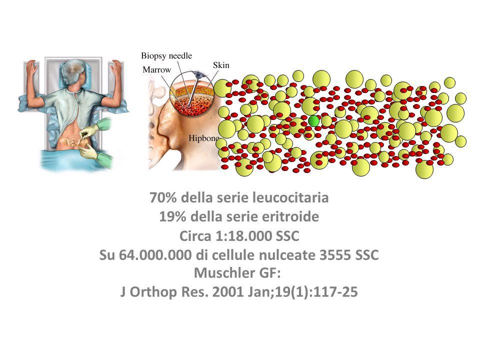 70% della serie leucocitaria 19% della serie eritroide Circa 1:18.000 SSC Su 64.000.000 di cellule nulceate 3555 SSC Muschler GF: J Orthop Res. 2001 J