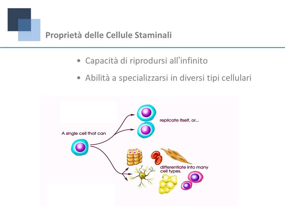 Proprietà delle Cellule Staminali Capacità di riprodursi allinfinito Abilità a specializzarsi in diversi tipi cellulari