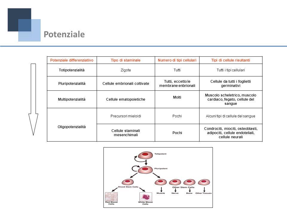 Potenziale differenziativoTipo di staminaleNumero di tipi cellulariTipi di cellule risultanti TotipotenzialitàZigoteTuttiTutti i tipi cellulari Plurip