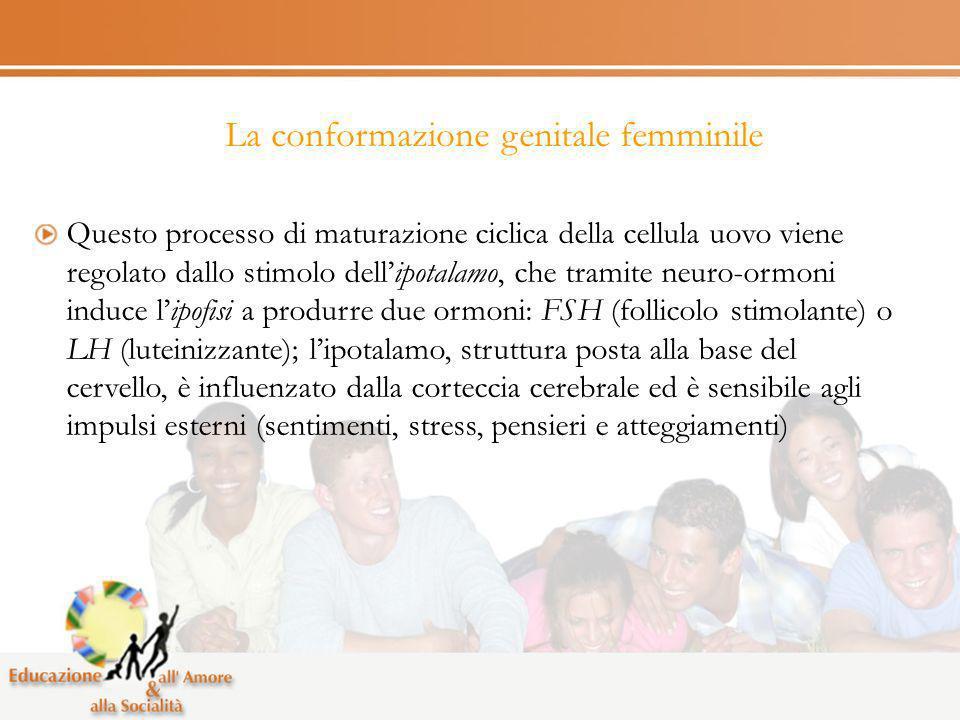 La conformazione genitale femminile Questo processo di maturazione ciclica della cellula uovo viene regolato dallo stimolo dellipotalamo, che tramite