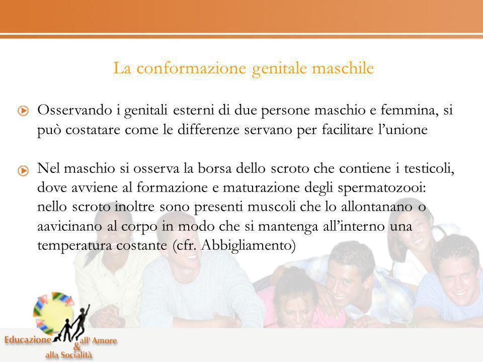 La conformazione genitale maschile Osservando i genitali esterni di due persone maschio e femmina, si può costatare come le differenze servano per fac