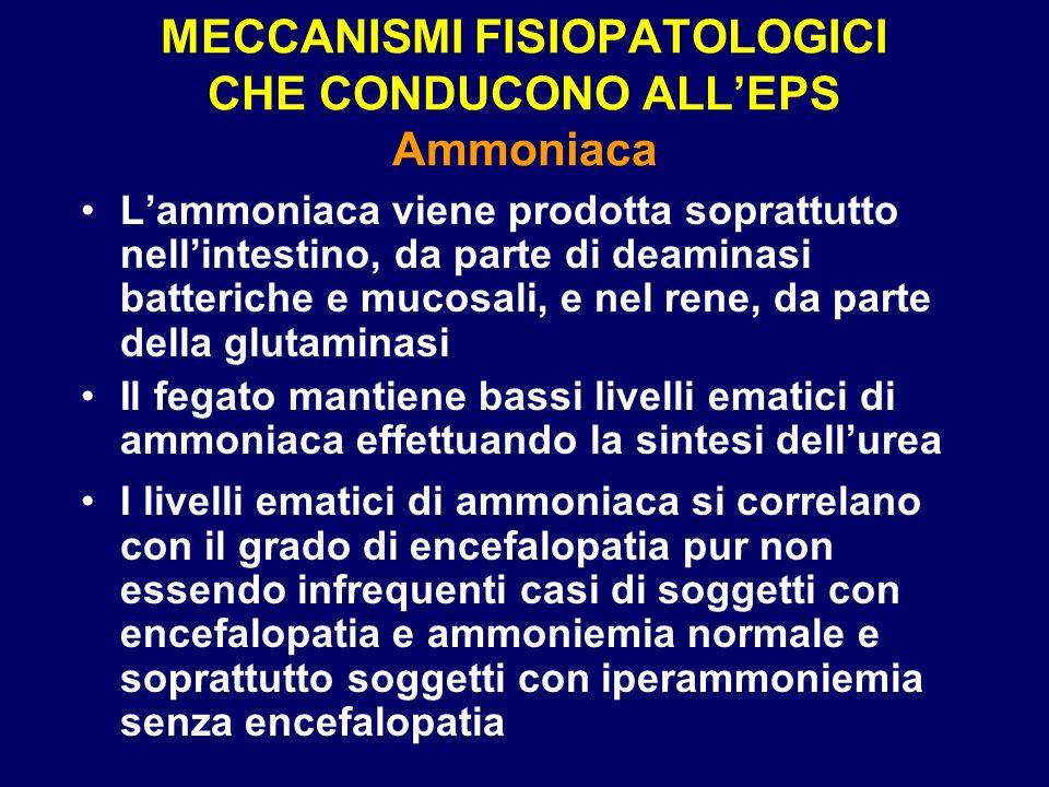 MECCANISMI FISIOPATOLOGICI CHE CONDUCONO ALLEPS Ammoniaca Lammoniaca viene prodotta soprattutto nellintestino, da parte di deaminasi batteriche e muco