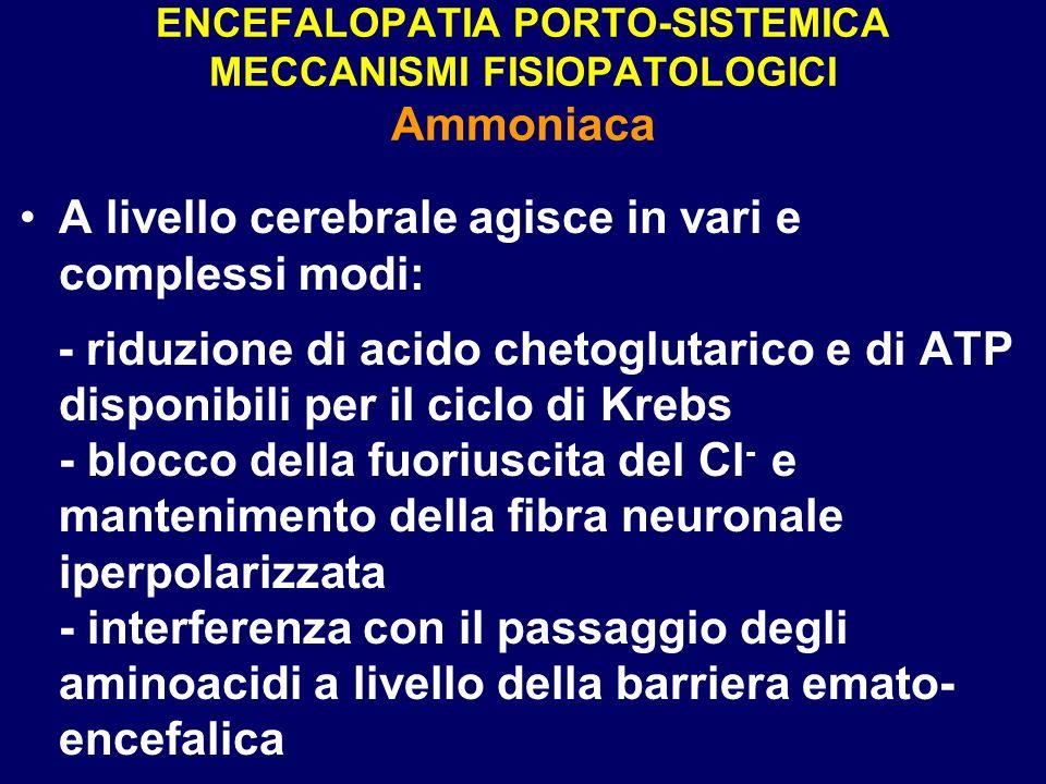 ENCEFALOPATIA PORTO-SISTEMICA MECCANISMI FISIOPATOLOGICI Ammoniaca A livello cerebrale agisce in vari e complessi modi: - riduzione di acido chetoglut