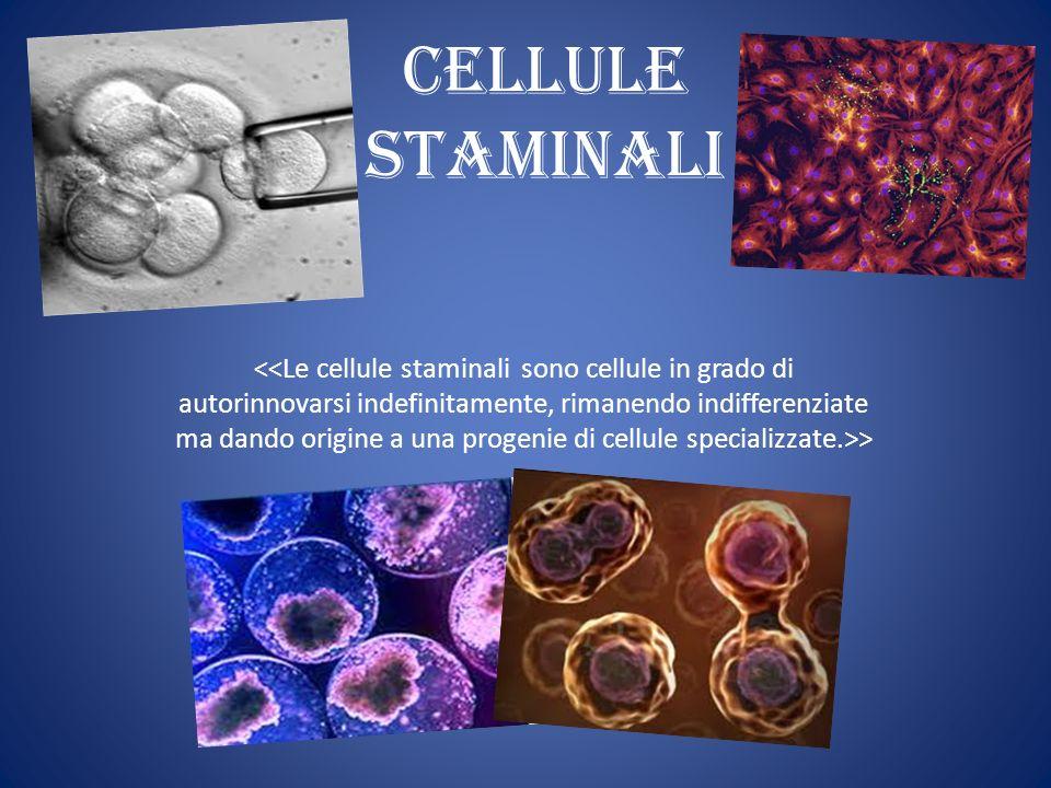 Cellule Staminali >